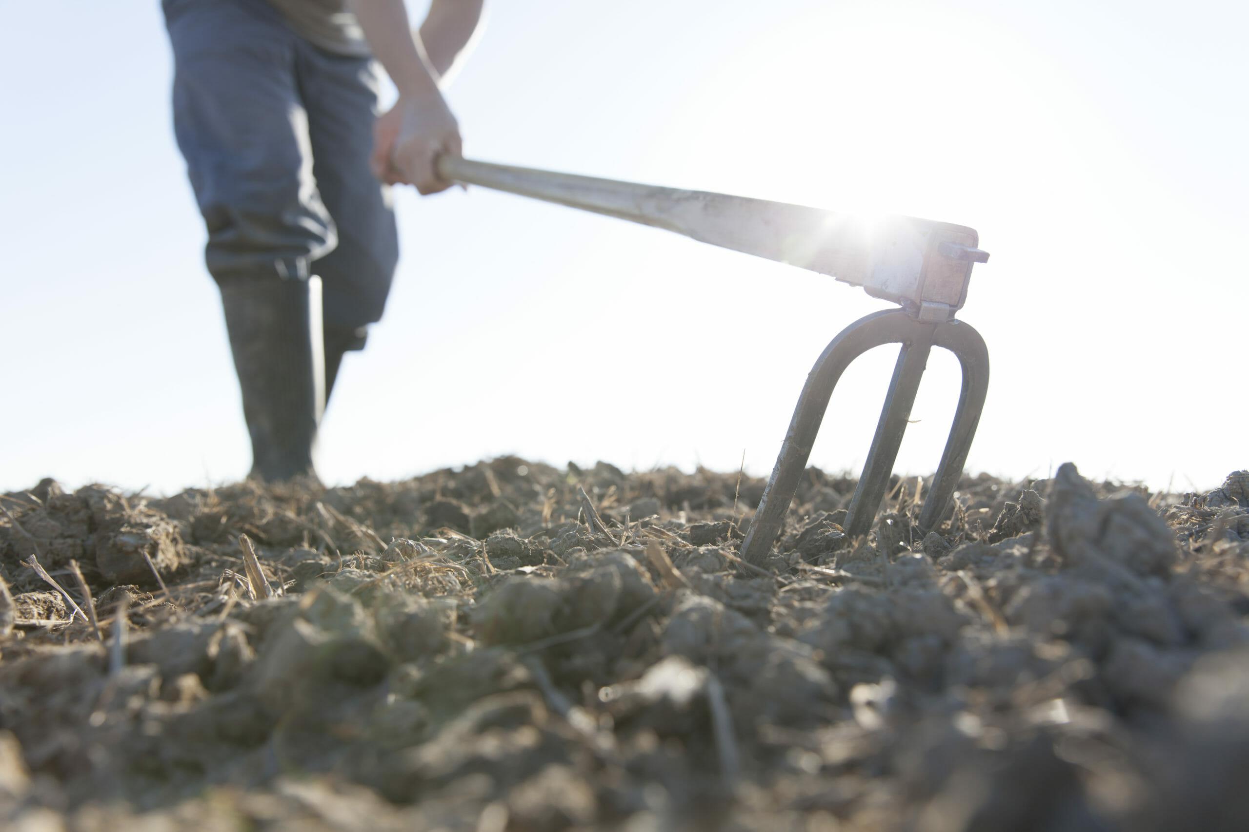 farmer-hoeing-633078308