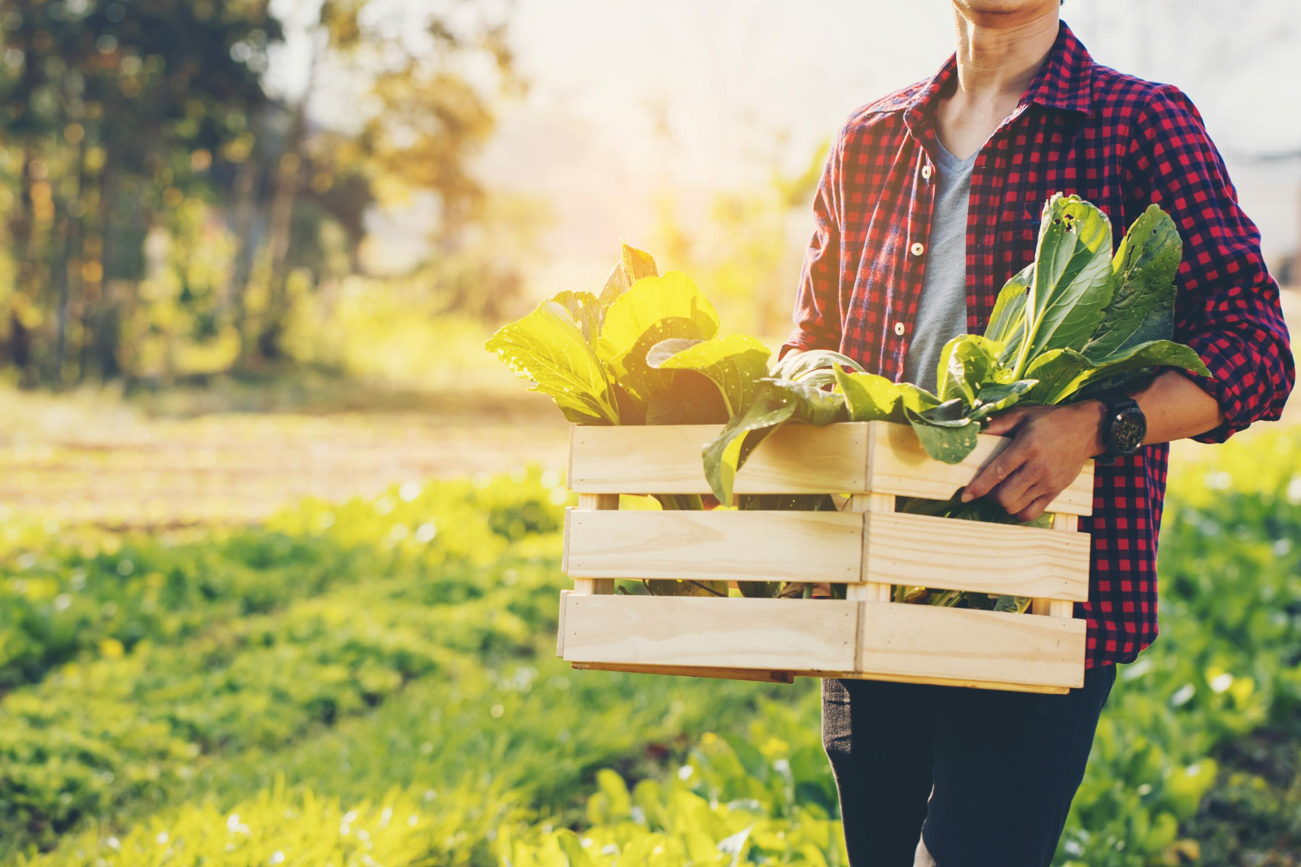 farmer-holding-crate-bio-vegetables-farm-1648630270