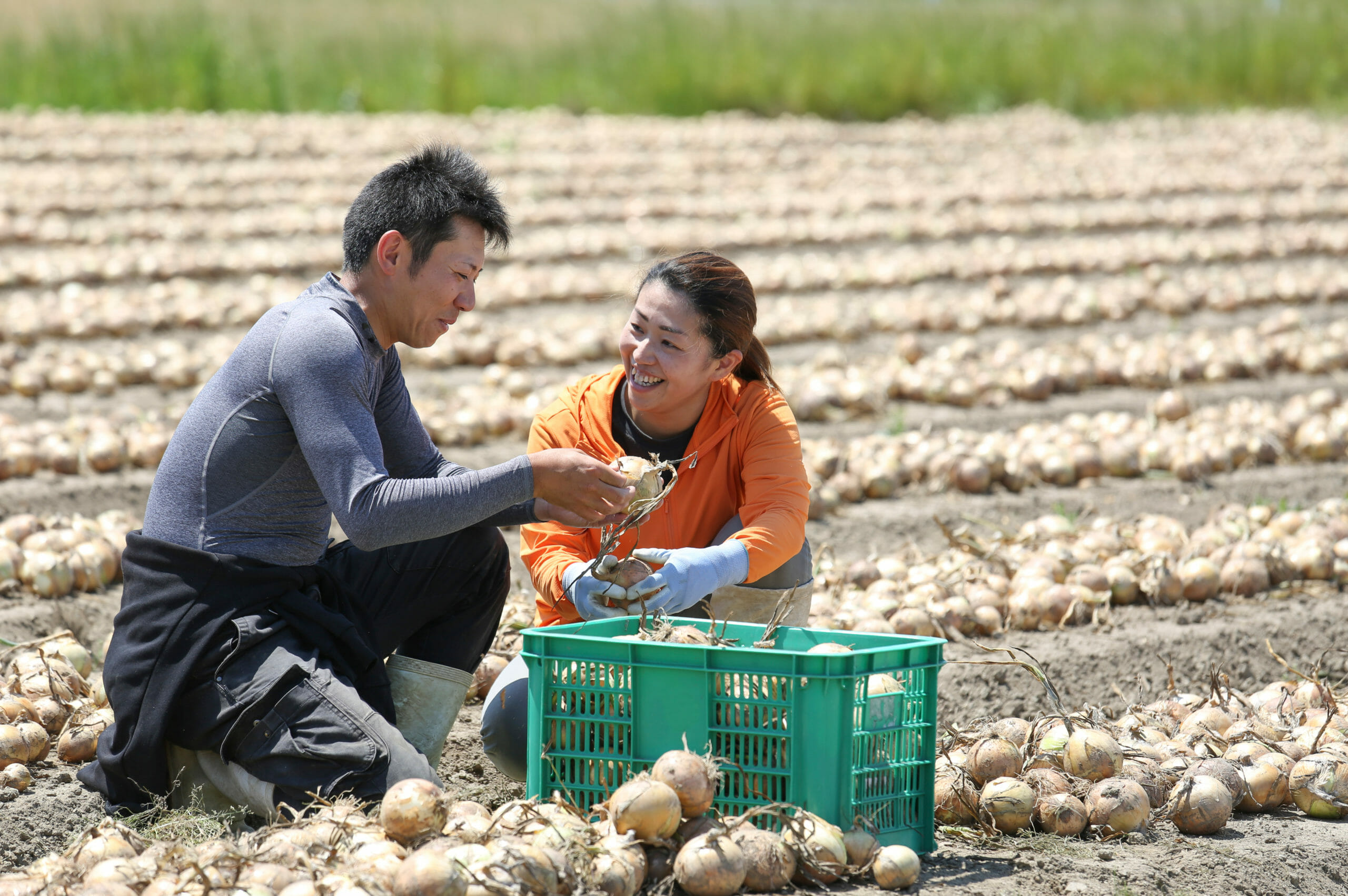 young-farmer-couple-harvesting-onions-1127292422